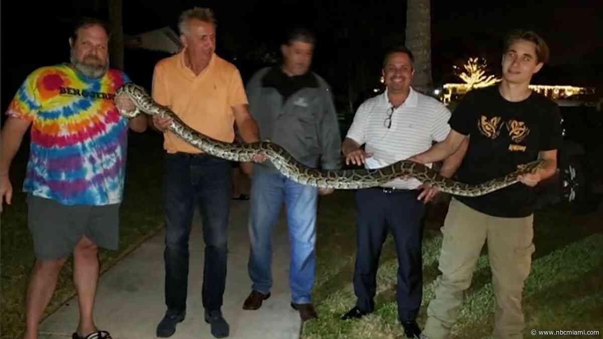 Burmese Python Found Outside Kendall Neighborhood