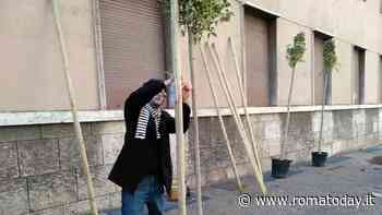 Porta Metronia, riparte il progetto Re Trees: con i soldi dei residenti acquistati 229 alberi