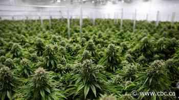 Former SickKids Motherisk website now directs to cannabis blog