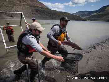 Low water flows key to next phase in Fraser River salmon rescue: DFO