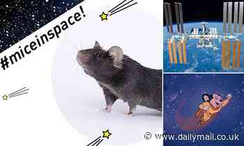 Genetically-enhanced 'mighty mice' will be launched to the International Space Station today