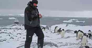 Climate change, overfishing affecting penguins: report