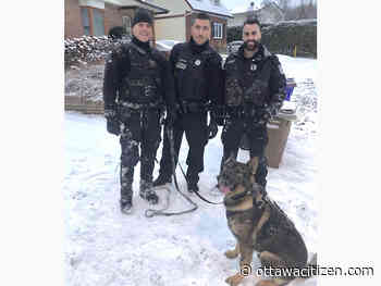Dogged K9 officer leads Gatineau police on 2.5 km track to arrest suspect