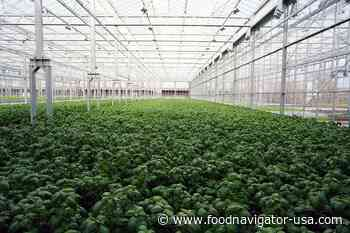 Gotham Greens expands hydroponic indoor farming mission to New England opening Rhode Island greenhouse