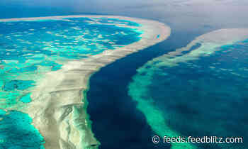 Australia's Great Barrier Reef Needs Insurance Against Climate Risks, Says Clyde & Co