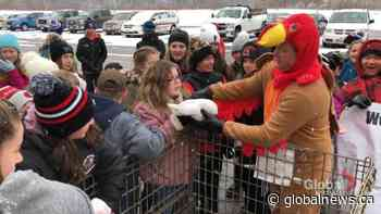 Moncton school principal dresses as turkey to motivate students to give back