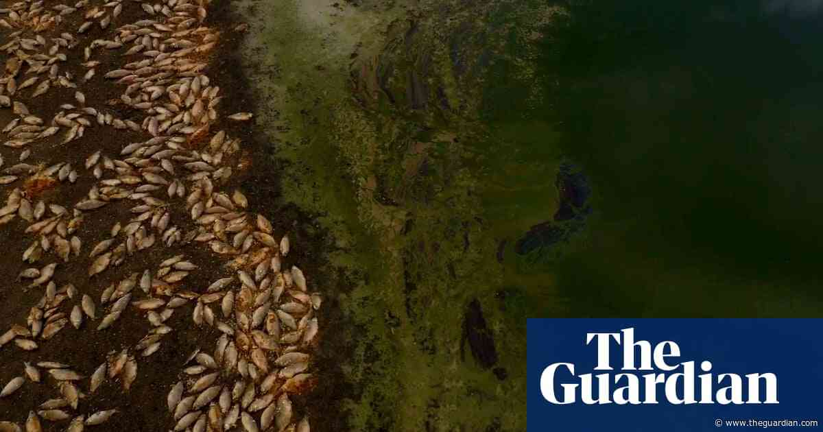 Murray-Darling authority warns of 'dire' summer of mass fish deaths and blue-green algae
