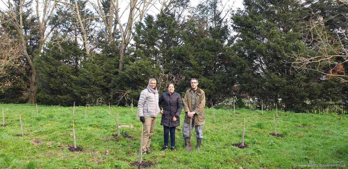 Thirty new trees planted in Harrow as part of Sadiq Khan scheme