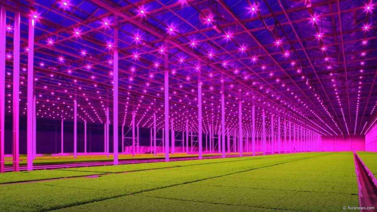 Early adaptors glastuinbouw worden kind van de klimaatrekening