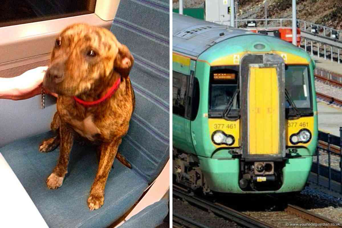 Quick-thinking train driver saves dog trapped on the tracks between Ewell East and Cheam