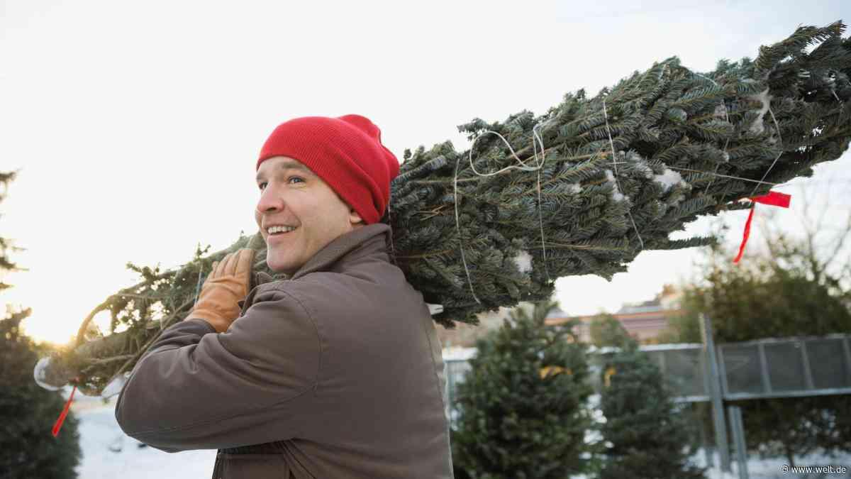 Natur, Plastik oder Leasing – so teuer wird Ihr nächster Weihnachtsbaum