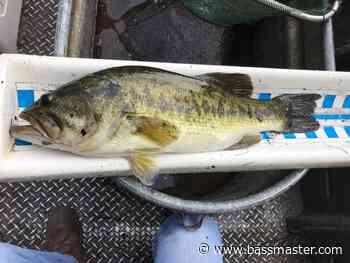 Arkansas River, Florida bass