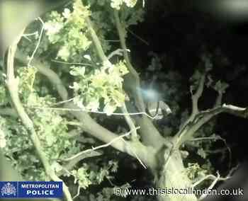 Video: The moment police arrest serial rapist Joseph McCann