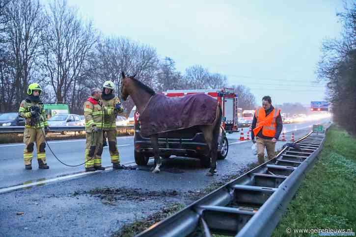 Snelweg A12 bij Zevenaar in beide richtingen afgesloten na incident met paardentrailer