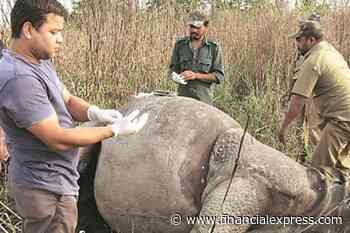 Police will have to protect rhinos and tigers from poachers: Experts