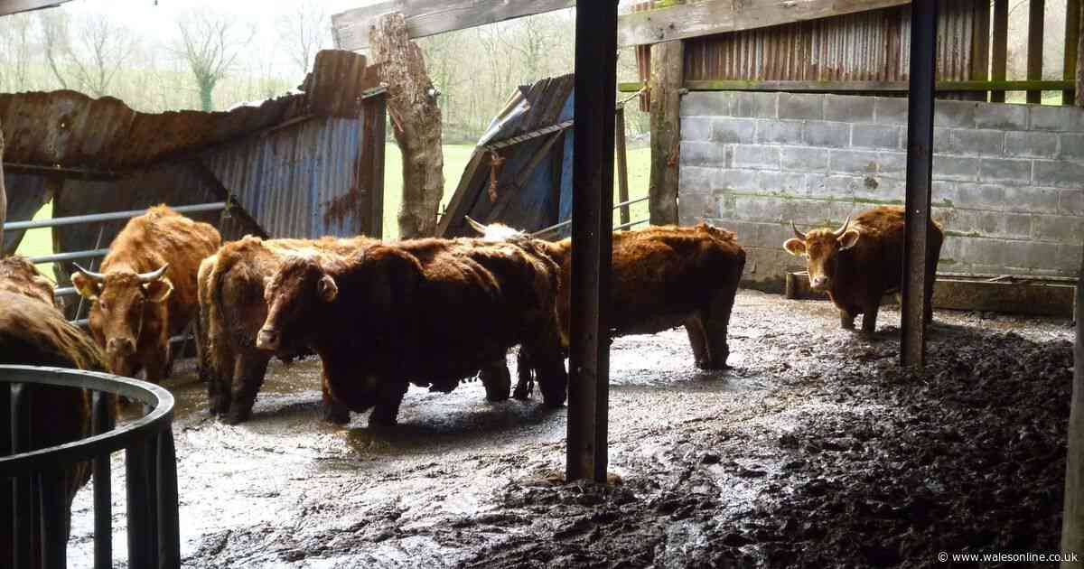 Brothers responsible for 'worst neglect ever seen' lose appeal against ban on keeping animals