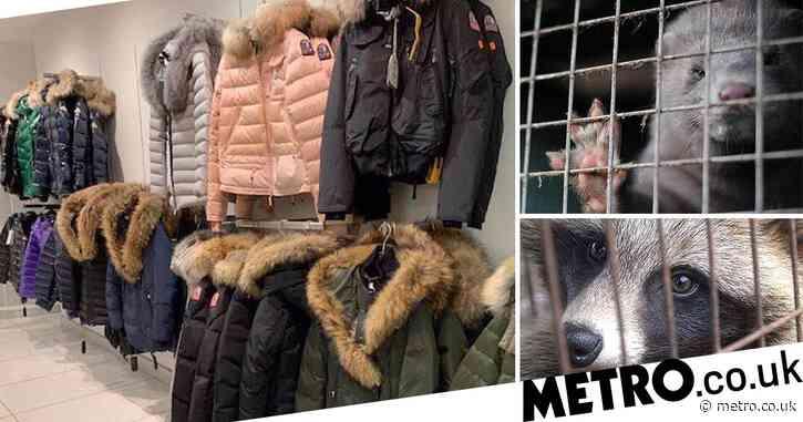 House of Fraser still selling fur despite pulling coats from shelves after protests