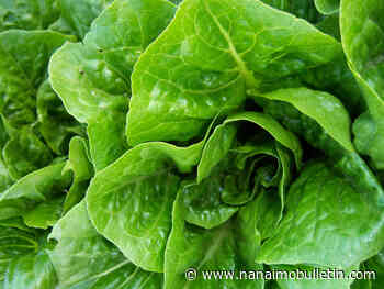 Don't eat romaine from Salinas, California, Canadian officials warn again