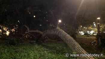 """In piazza dei Navigatori """"piovono"""" alberi: crollati due pini ad alto fusto"""