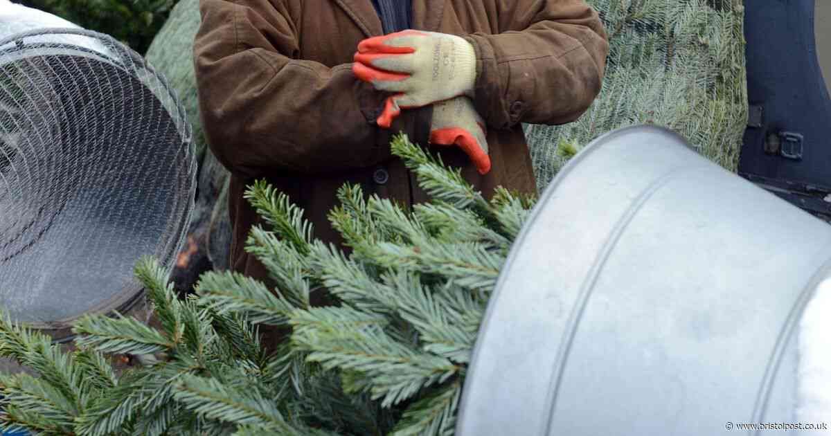 The Bristol grandfather who has sold Christmas trees for more than 60 years