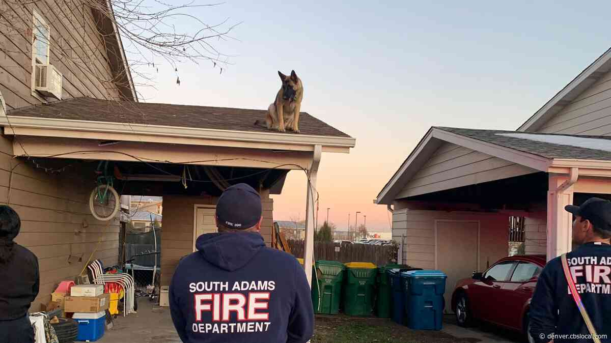 Max The German Shepard Saved From His Own Roof