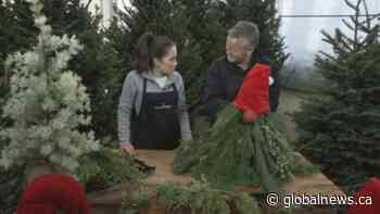 GardenWorks: Holiday Garden Gnome