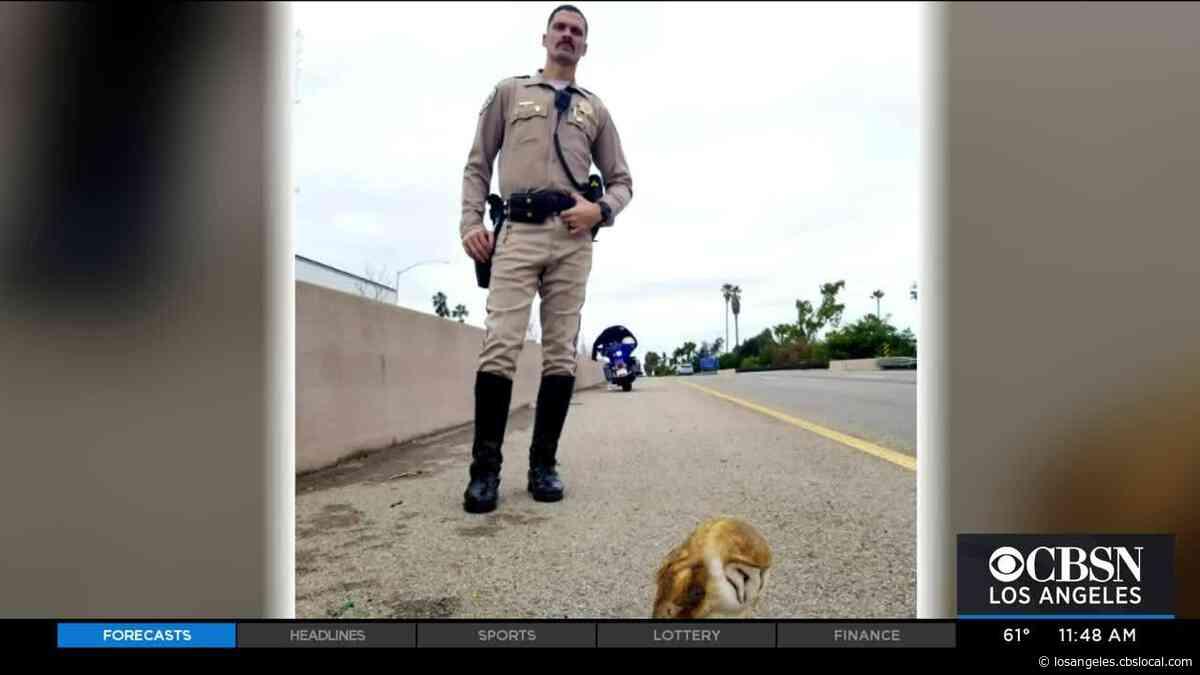 CHP Officers Save Owl Found On 101 Freeway In Santa Barbara