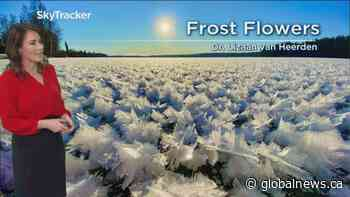 Frost flowers spotted across B.C.