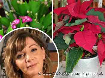 HOUSEPLANTS: Why poinsettias and Christmas cacti are not just for Christmas