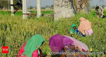 Over 36 lakh women farmers have benefited from govt scheme