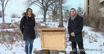 Pair of U of S students doing their part to save bees