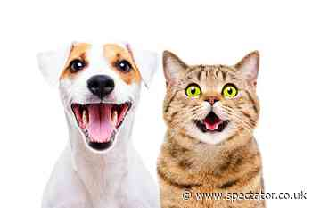 As any pet owner can attest, <strong>animals do communicate</strong>. But do they have languages? Do mating dances, alarm calls, and meows have a grammar?