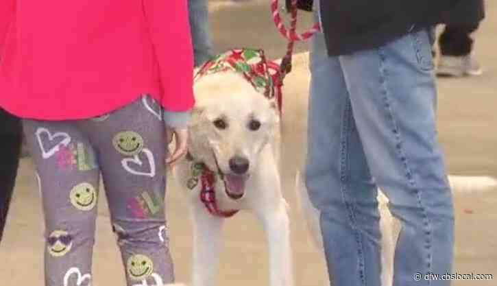 Hundreds Of Pets In North Texas Now Have Families To Spend The Holidays With