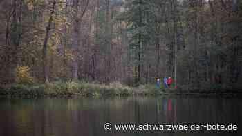 Schwarzwald: Erste Projekte zu Heil- und Kurwäldern