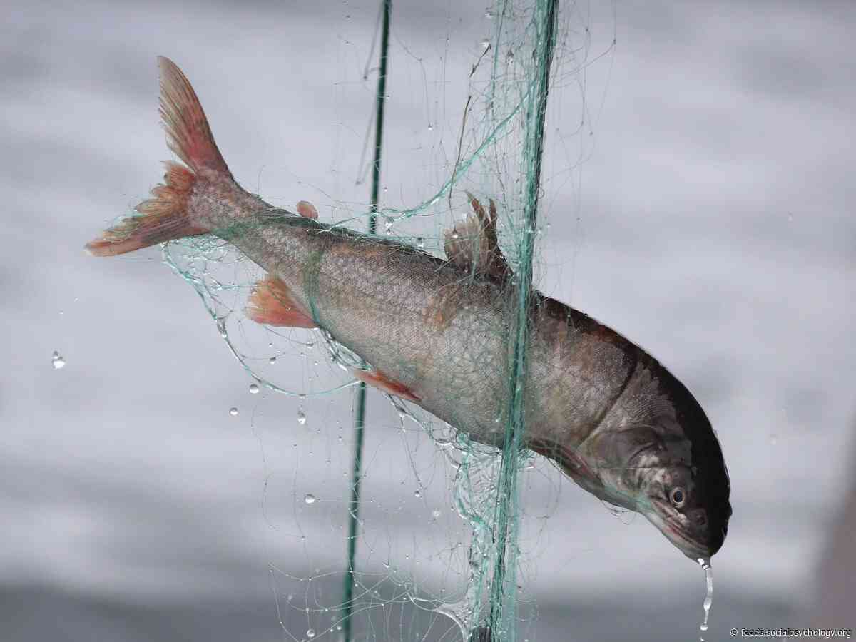 Fish Feel Pain in Similar Way to Humans, Report Concludes