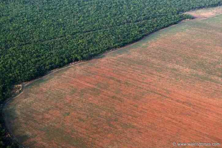 The World Is Losing An Area Of Forest Equivalent To The UK Every Year