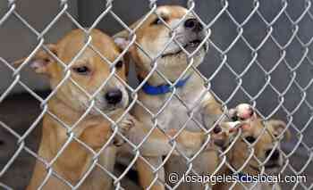 Animal Adoption Center To Waive Fees This Weekend