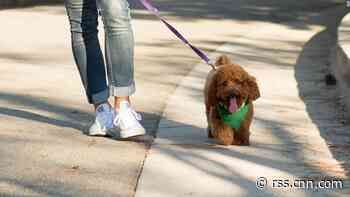 SoftBank gives up on dog-walking startup Wag