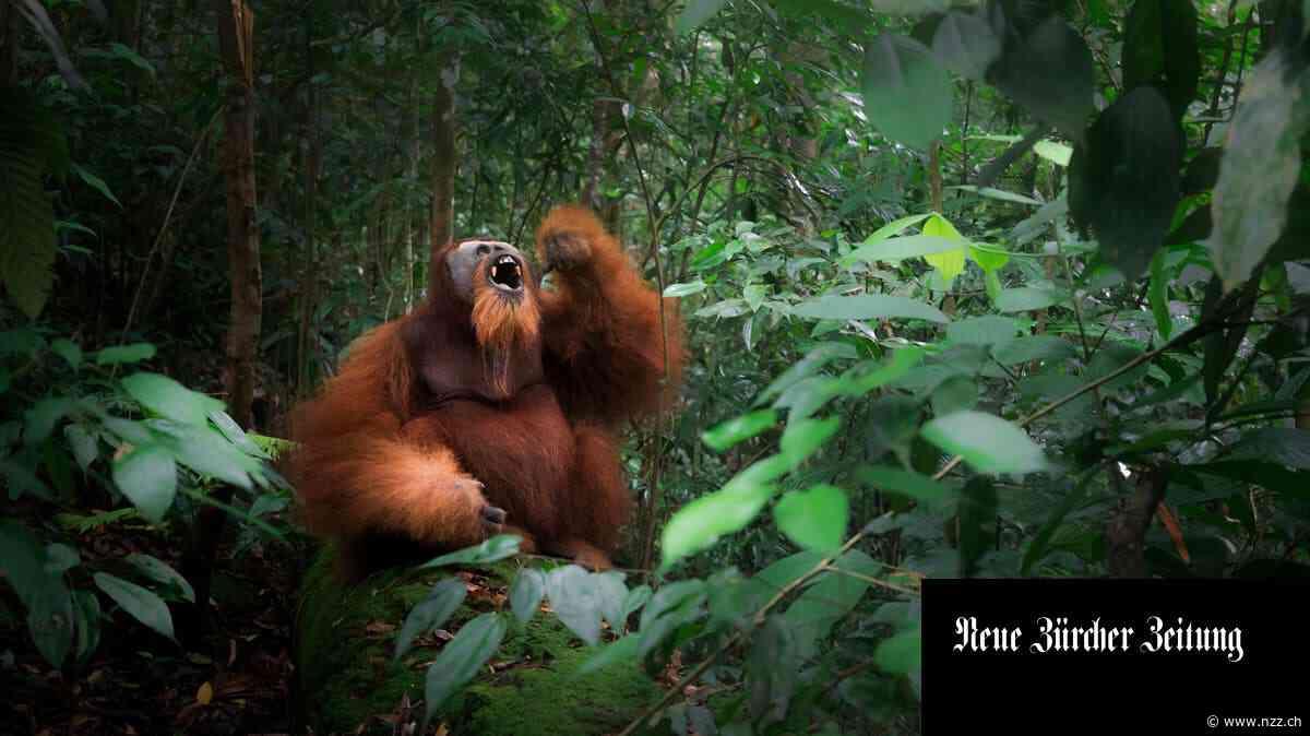 Diese Affen zeigen, was den Menschen ausmacht