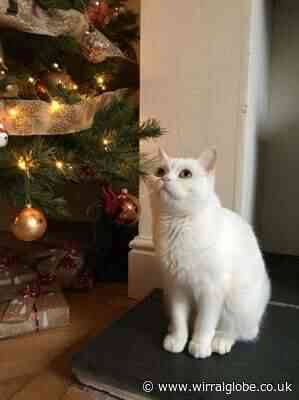 Wirral cat lovers urged to help felines in need this Christmas