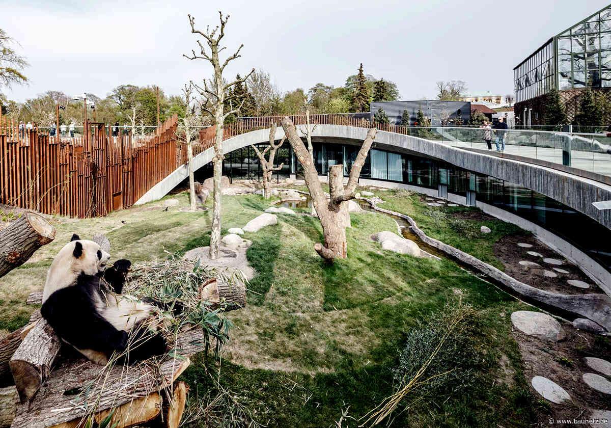 Zwei Bären im Kreisrund  - Panda-Anlage von BIG im Zoo Kopenhagen
