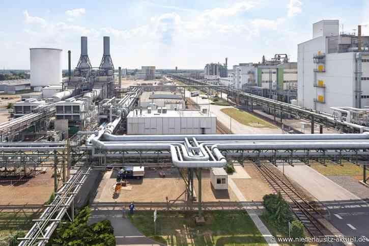 Fabrik für Batteriekomponenten in Schwarzheide? BASF Entscheidung steht aus