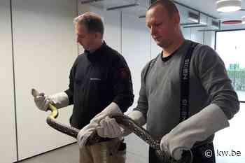 Dierenreddingsteam legt beslag op slangen, hagedissen en piranha's bij Veurnse inwoner