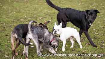 Hund auf Hund gehetzt? Halter vor Gericht