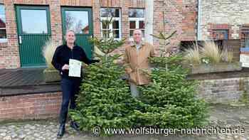 Weihnachtsbaumverkauf auf dem Rittergut Nordsteimke