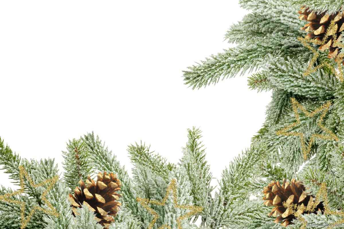 Discover: There's a reason 'Christmas' scents like pine trees and turkey are so evocative