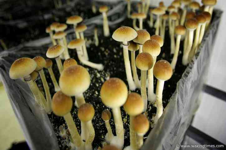 Scientists Have Created a Bacterium That Poops Huge Amounts of Psilocybin