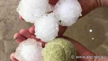 ACCC foils 'outrageous' plan to rip off Sydney hailstorm victims