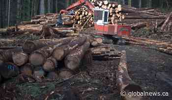 Striking Vancouver Island forestry workers, Western Forest Products return to bargaining table