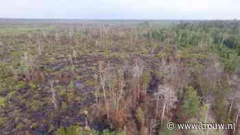 Shells compensatiebos: brandstichting en ruzie met de lokale bevolking